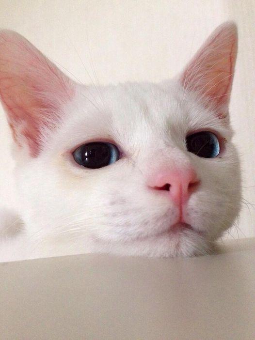 【ギャップ萌え】超絶美形ネコの寝顔があまりにも酷いとネットで話題! | Amp.