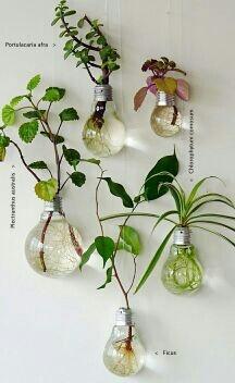 Illuminating the ecology,  ecologia, medio ambiente