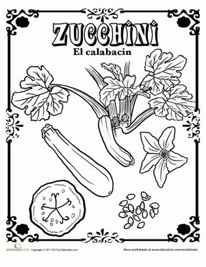 From seed to flower to vegetable, take a look at the zucchini with this coloring page and brush up on English and Spanish vocabulary!