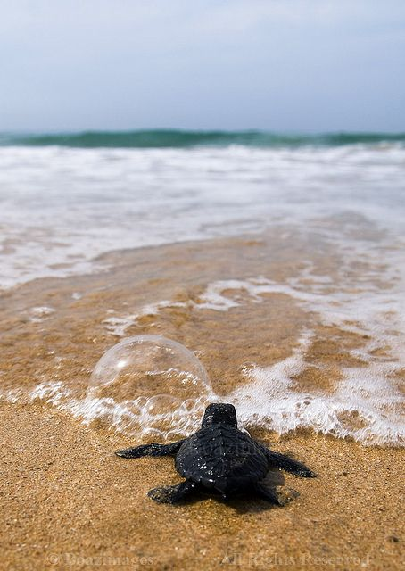 Sea Turtles are a not an uncommon sight in the island.