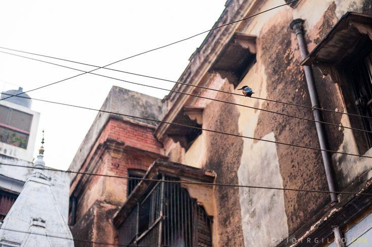 kokkabura Varanasi