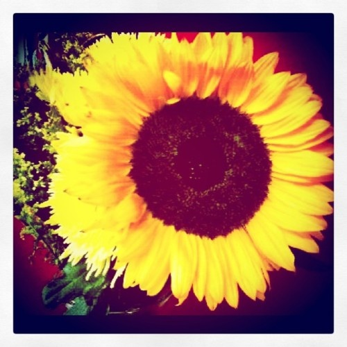 I love sunflowers...and daisies.