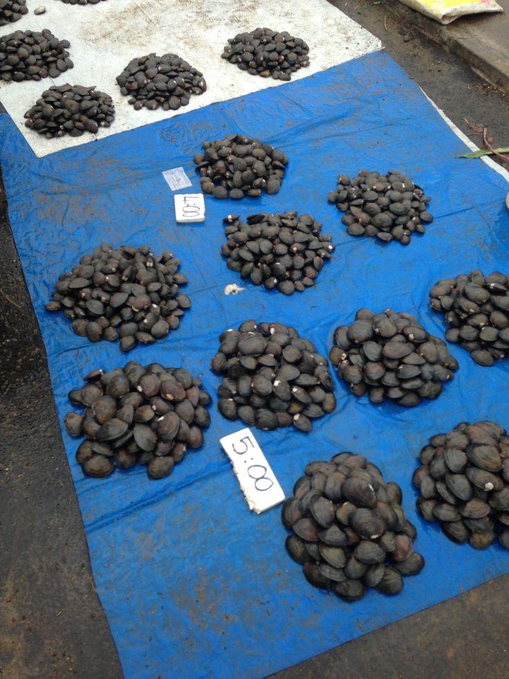 Fresh mussels for sale in Suva Fiji