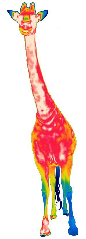 Thermal images of animals at ThermalCities.Com