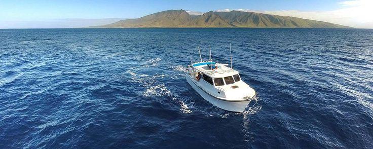 1000 ideas about chesapeake bay fishing on pinterest for Maui bottom fishing