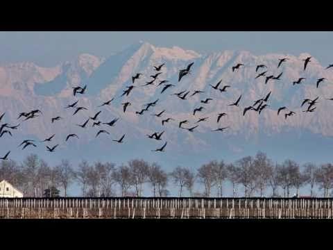 """Franco Battiato """" gli Uccelli """" - YouTube"""