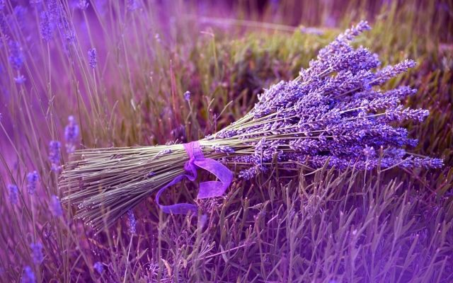 positive Wirkung von Lavendel pflege eigenen garten bündel