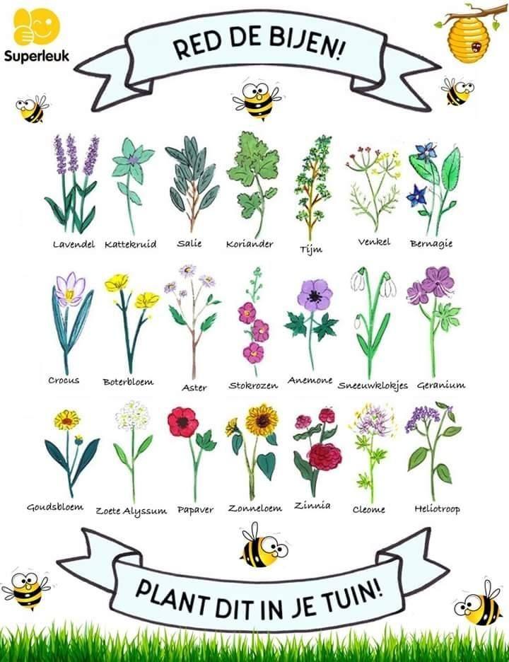 Planten Voor Bijen.Bijvriendelijke Planten Bijen En Bloemen Kruidentuin