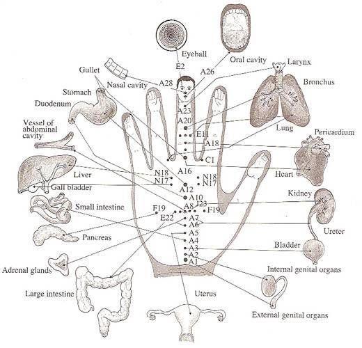 elke vinger