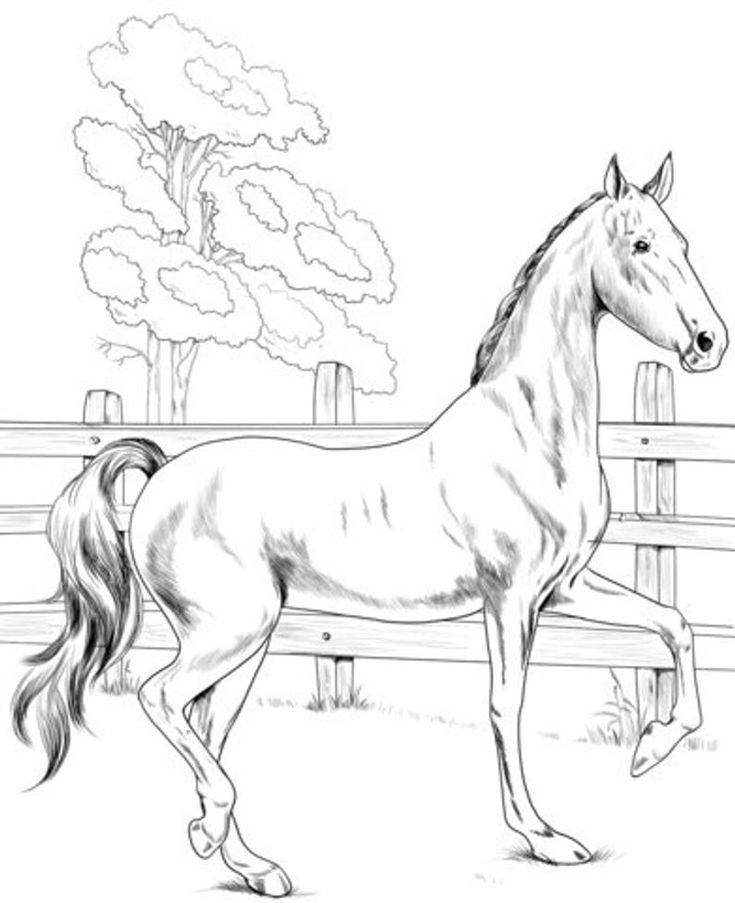 14 Horses Coloring Pages For Kids Kids Coloring Pages Etsy Horse Coloring Books Horse Coloring Horse Coloring Pages