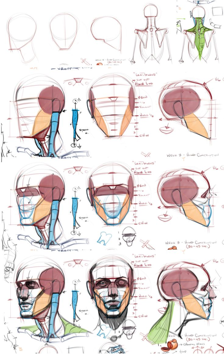 Michael Hampton tuts #anatomy #head #male