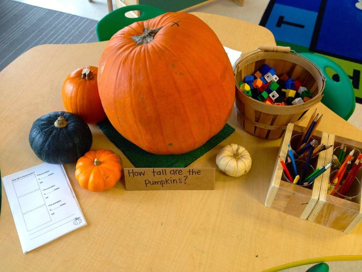 Pumpkin measurement provocation- put out with cubes, paper clips, rulers, tape measure, scale, etc