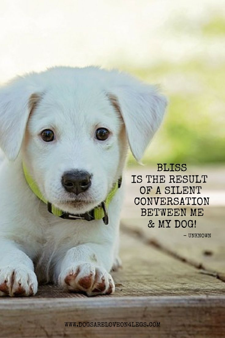 Dog Quote Bliss Is The Result Of A Silent Conversation Between