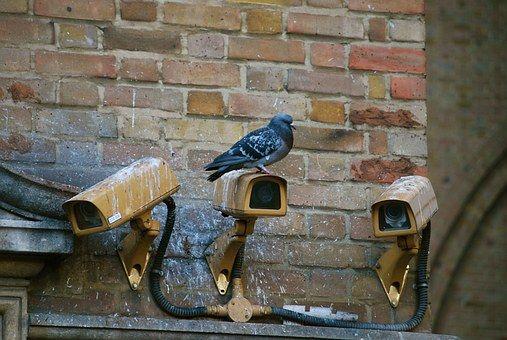 Camera, Spy, Pigeon, Surveillance