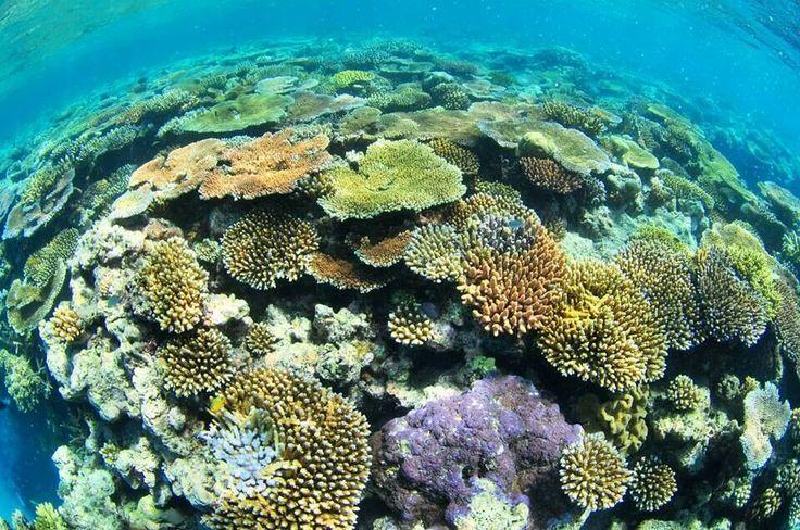 Hastings Reef Coral Garden, Great Barrier Reef, Queensland, Australia.