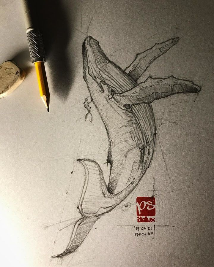 Ink and Pencil Animal Drawings.