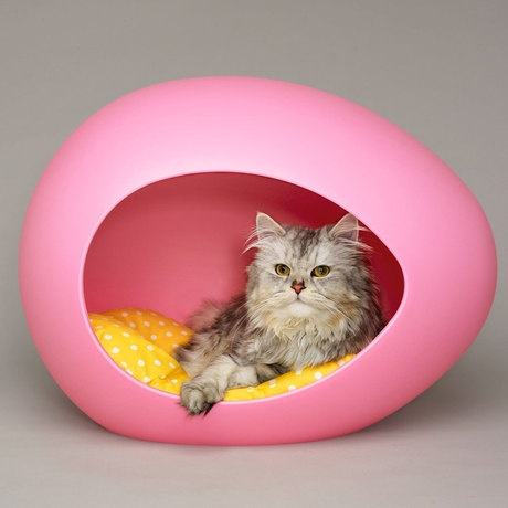 CAT IN AN EGG!