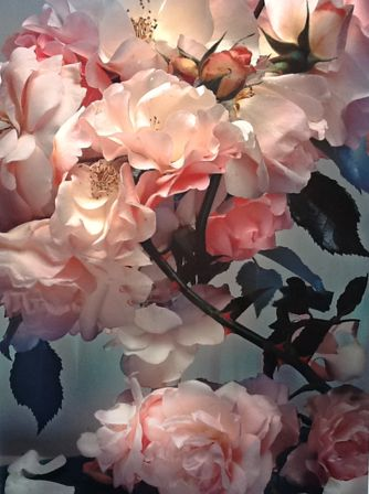 Photo: Nick Knight, 2008. The photographer was late recently for SHOWstudio because he was photographing roses.