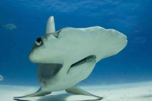 Hammerhead Shark Facts You Probably Didnt Know Shark Week 2017