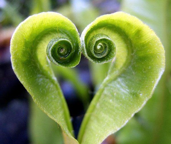 25 Nature Hearts <3
