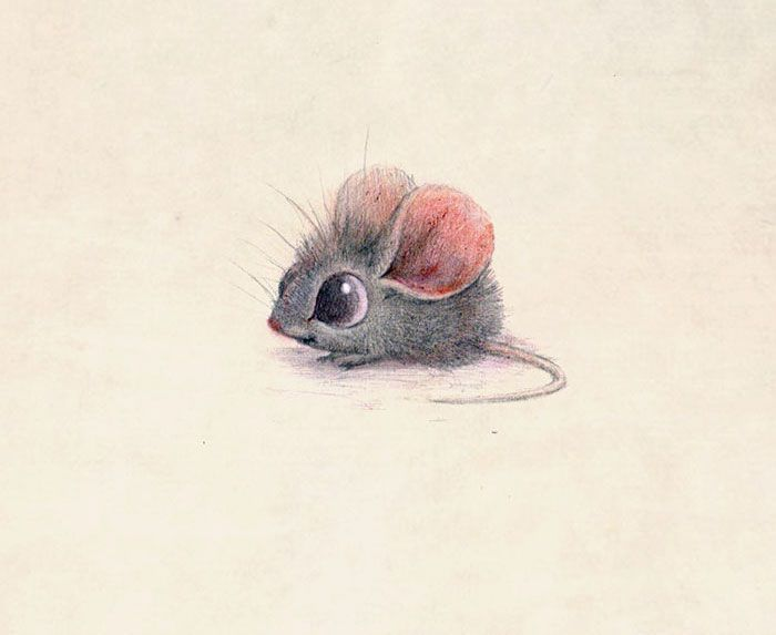 Cute Animal Illustration - by Sydney Hanson