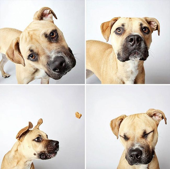 Fotos creativas y hermosas para promover la adopción de perros. #fotografía #perros #adoptarperro #creatividad