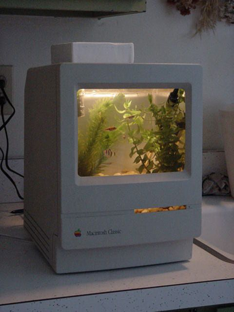 I'm waiting for one of my old Macs to die so that I can transform it into a MacQuarium. It's going to be a long wait.