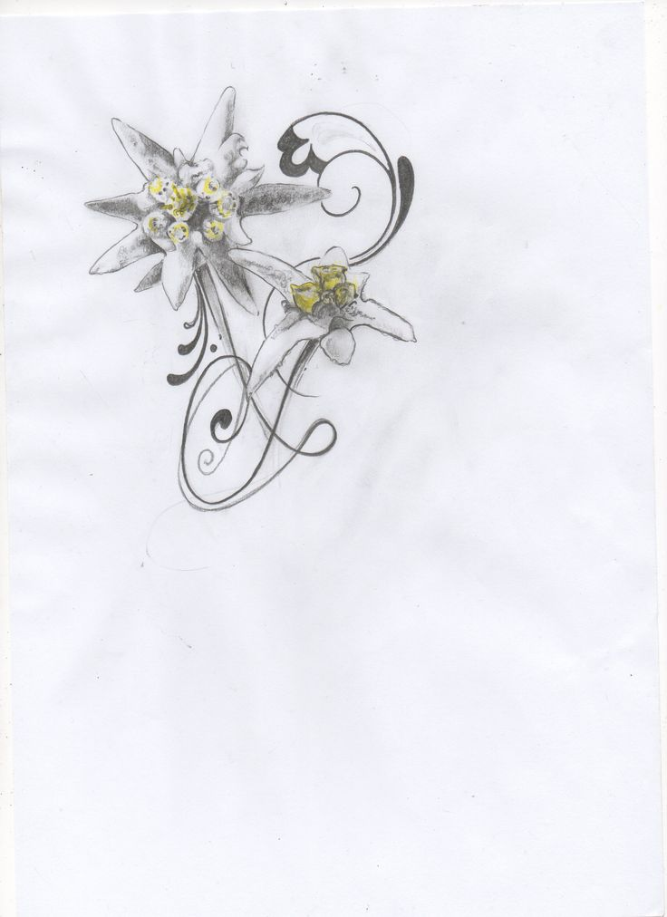 best  edelweiss tattoo ideas only on   tiny owl, Natural flower