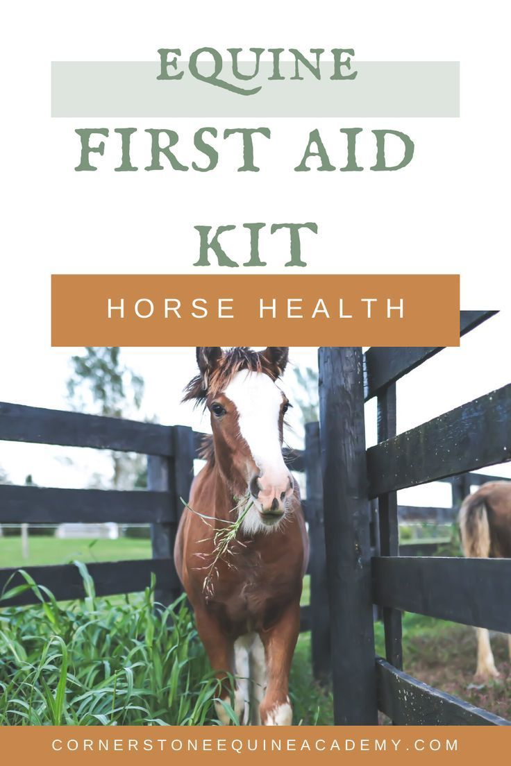 Be Ready For Any Emergency With A Fully Stocked Equine First Aid Kit Do You Have These 20 Items Cornerstone Equine Academy Horses Horsehealth Firstaid I 2020