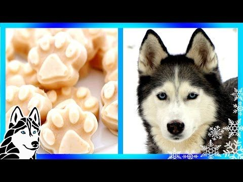 DIY FROSTY PAWS FOR YOUR DOG | Frozen Homemade Dog Treats - Gone to the Snow Dogs | Siberian Husky Love