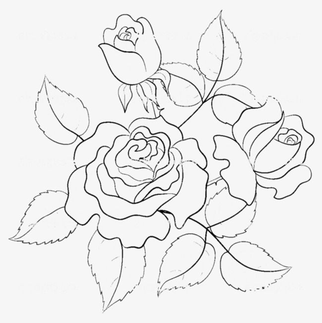 Hand Painted Roses Line Drawing Flowers Line Drawing Png Transparent Clipart Image And Psd File For Free Download Flower Drawing Embroidery Flowers Pattern Embroidery Patterns