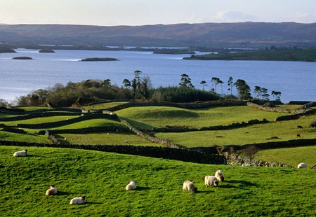Irish CountrysideIreland Th, Ireland Scotland, Beautiful Ireland, Visit Ireland, Places I D, Ireland So, Ireland Sheep, Green Ireland