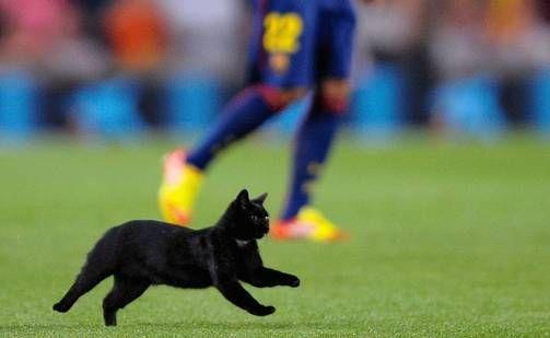 Yllätysvieras kävi hakemassa aplodit Camp Noun lehtereiltä. -- Cat at Camp Nou 2014