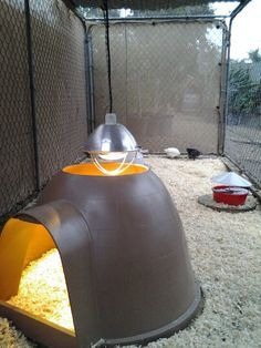 Refurbished an old dog igloo fora chicken house. Cut a hole in the top for the heatlamp.