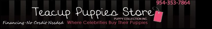 Teacup Puppies for sale at Teacup Puppies Store #pet #apparel http://pet.remmont.com/teacup-puppies-for-sale-at-teacup-puppies-store-pet-apparel/  teacup puppies – teacup dogs – teacup puppies for sale – Teacup Yorkies, Maltese Teacups and Toys for Sale, Teacup Yorkies, Teacup Puppies for Sale, Teacup Yorkies, yorkie dog, teacup maltese dog. teacup pomeranians, Teacup chihuahuas and dogs for sale. teacup dog, teacup puppy,we have tiny teacups and toy breeds available. High end teacup…