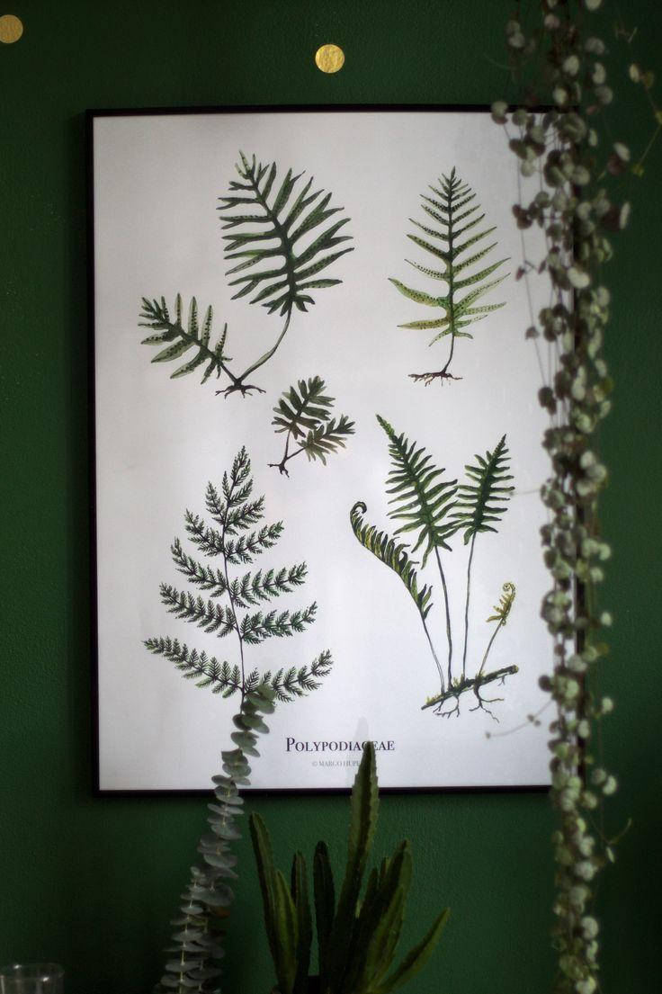 ferns print 50x70 cm