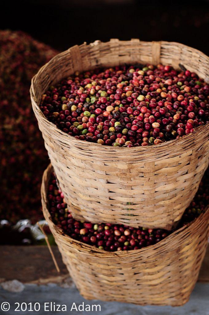 baskets of coffee beans Fotografia café, Ideias de