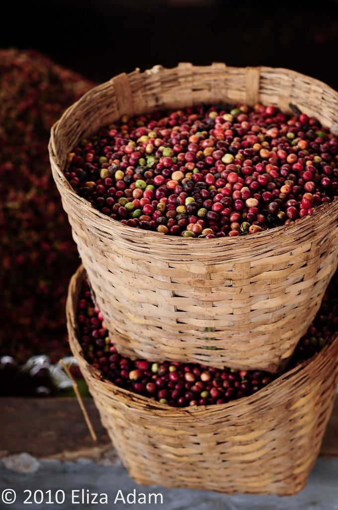 baskets of coffee beans, Yogyakarta, Indonesia
