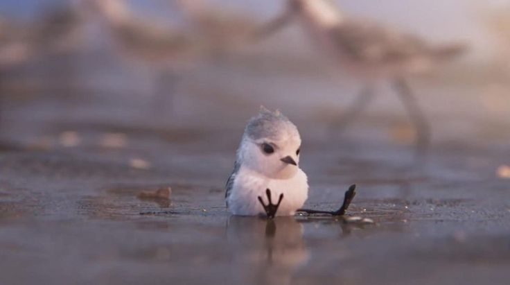 WATCH: Pixar Unveils New Clip from 'Piper' Short | Animation World Network