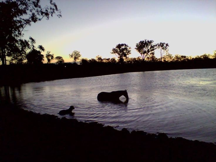 Our horses and dog enjoy their lives out here at the homestead.  This is Australia living