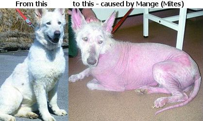 Different Reasons For Hair Loss In Dogs