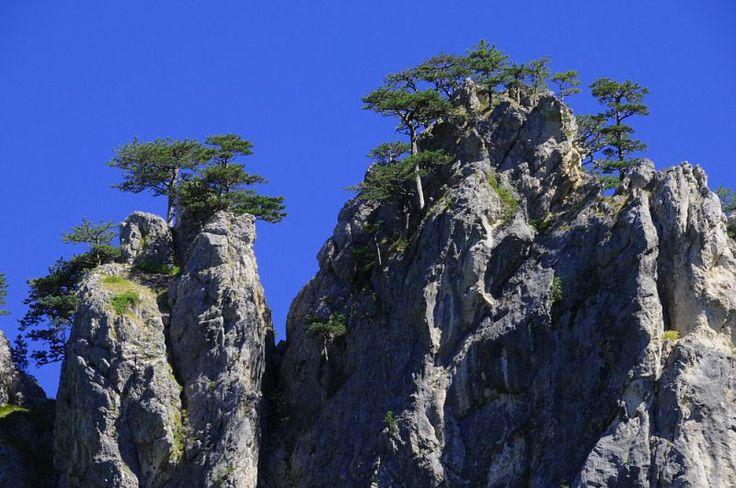 Bosnia - flag pines