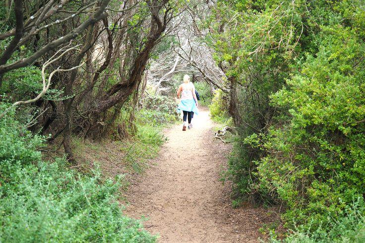 The bushwalk to Bushrangers Bay | Cape Schanck | Mornington Peninsula