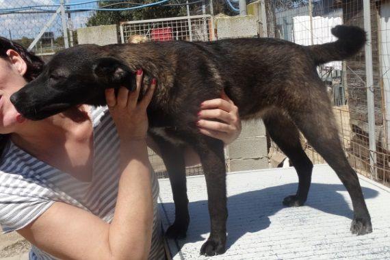 Streunerherzen E V Shop Pets4homes Mustangs Niedliche Welpen Hunde Und Tiere