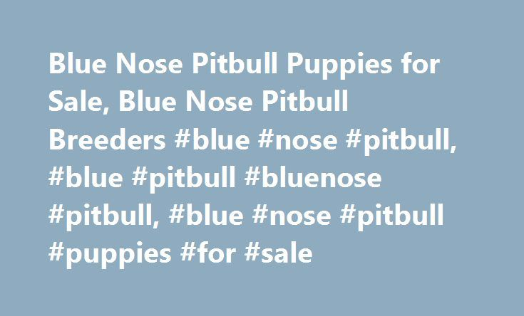 Blue Nose Pitbull Puppies for Sale, Blue Nose Pitbull Breeders #blue #nose #pitbull, #blue #pitbull #bluenose #pitbull, #blue #nose #pitbull #puppies #for #sale http://usa.nef2.com/blue-nose-pitbull-puppies-for-sale-blue-nose-pitbull-breeders-blue-nose-pitbull-blue-pitbull-bluenose-pitbull-blue-nose-pitbull-puppies-for-sale/  # Blue Nose Pitbulls Blue Nose pit bull puppies are some of the most active dogs you can buy, which is great for families who like to stay active. If you like to stay…