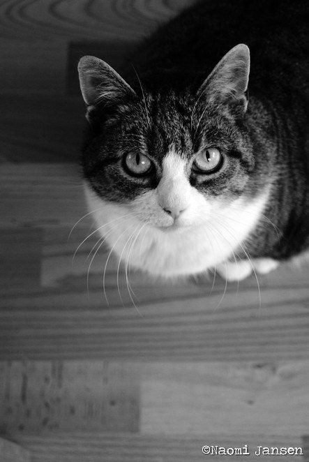 Looking up cat photography. Black & White door theimperfectartistNL