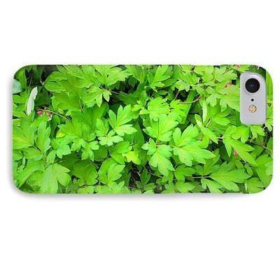 A Leaf Is An Organ Of A Vascular Plant - Phone Case