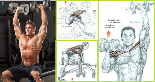 Dumbbell Workouts To Build Muscle