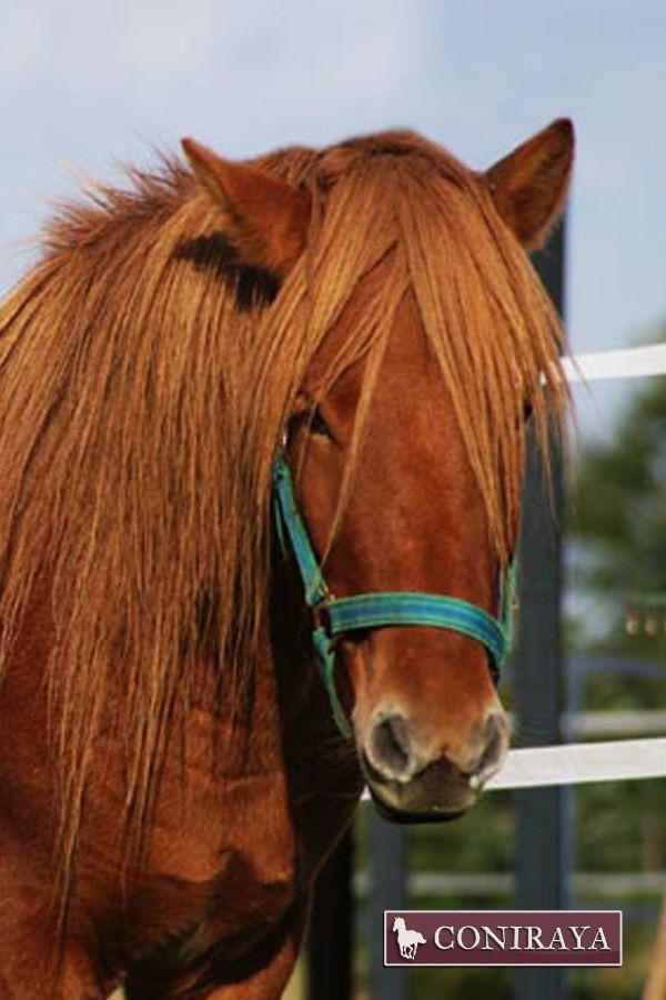To iść do tego fryzjera, czy nie? :D #konie #coniraya