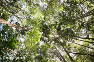 Free rainforest information for kids and teachers. Includes maps, pictures, and interviews with scientists.